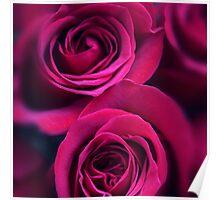 Rose Rapture Poster