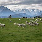 New Zealand by Margaret Metcalfe