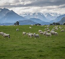 New Zealand by Margaret Metcalfe
