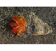 Maple Leaf - Playful Sunlight Patterns Photographic Print