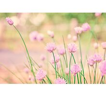 Chives in a garden Photographic Print