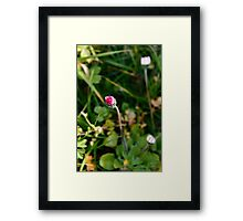 Daisy Flower Framed Print