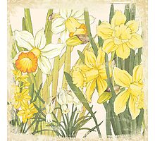 Vintage floral print on shabby white - Daffodil Flower Photographic Print