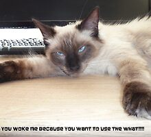 You Woke Me  Because You Want To Use The What? by pault55