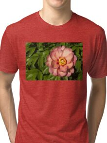 Exotic Beauty - Unusual Peony Basking in the Sunshine Tri-blend T-Shirt