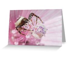 Synema Globosum Greeting Card