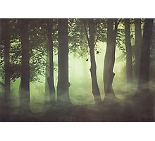 Wispy Forest Mists Photographic Print