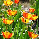 Tulip Bouquet by Debbie Oppermann