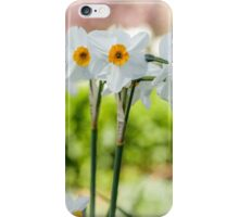 Happy Daffodils  iPhone Case/Skin