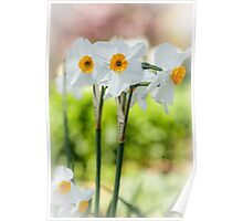 Happy Daffodils  Poster
