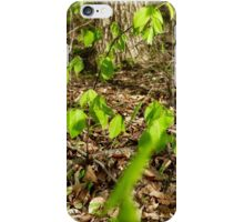 Growing Trees in the Spring iPhone Case/Skin