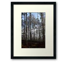 Misty trees in the morning Framed Print