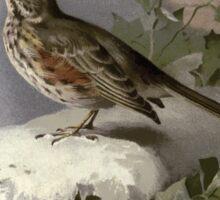 Familiar wild birds Swaysland 1883 V3 151 Redwing Sticker