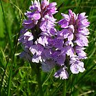 Heath Spotted Orchid by lezvee