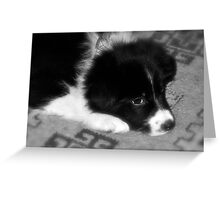FIRST NIGHT HOME Greeting Card