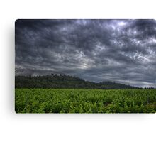 Just Before The Rain Canvas Print