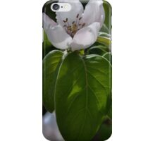 Quince Flowers iPhone Case/Skin
