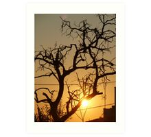 Twisted Sunset Art Print