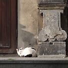 Cat napping by mikequigley