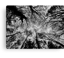 Tree branches Black and White Canvas Print