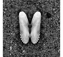 Shell Wings Photographic Print