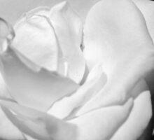 Heart Petal White Rose Sticker