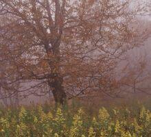 Graveyard Fields in the Fog Sticker