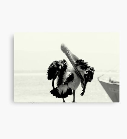 Pelican Portrait In Black And White Canvas Print