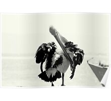 Pelican Portrait In Black And White Poster