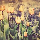 Tulips and More Tulips by KatMagic Photography