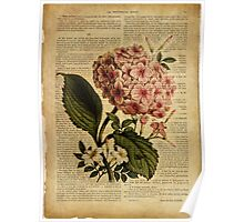 Botanical print, on old book page - flowers- Hydrangea blossom Poster