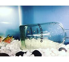 Tequila Fishy Photographic Print