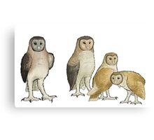 Giant barn owls from various islands Canvas Print