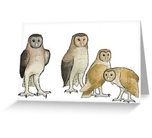 Giant barn owls from various islands Greeting Card
