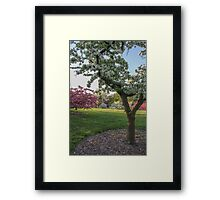 Spring Bloom2 Framed Print