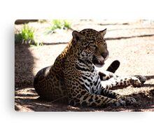 Jaguar Growl Canvas Print