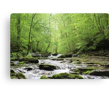Serenity Springs Canvas Print
