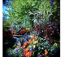 Magic Garden Photographic Print