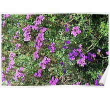 Green bush with purple flowers. Poster