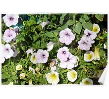 Colorful flowers and green leaves. Poster