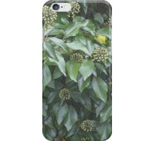 Ivy Seeds iPhone Case/Skin