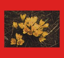 Spilled Gold - Bright Yellow Crocus Harbingers of Spring Baby Tee