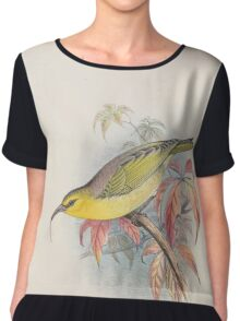 Aves Hawaiienses the birds of the Sandwich Islands Scott Wilson 1899 028 Hemignathus Lucidus Women's Chiffon Top