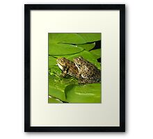 Mating frogs Framed Print