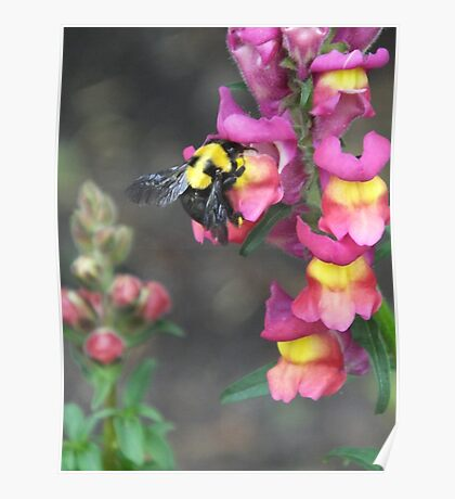 Bumble bee and flower Poster