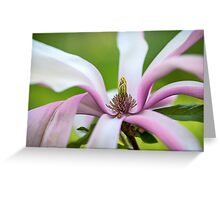 Magnolia Flower Abstract Greeting Card