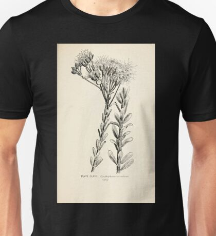 Southern wild flowers and trees together with shrubs vines Alice Lounsberry 1901 166 Carphephorus Corymbosus Unisex T-Shirt
