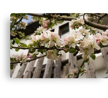 Facades and Fruit Trees - the Villa and the Apple Canvas Print