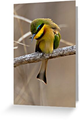Little Bee Eater by Michael  Moss