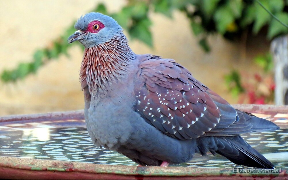A feathered friend in my garden by Elizabeth Kendall